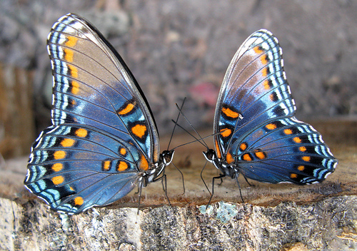 ночные бабочки фото