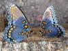 butterfly-farm2