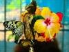 butterfly-farm3