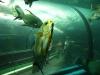 phuket-aquarium-3