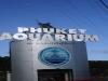 phuket_aquarium1