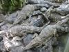 crocodille_2