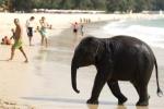 Пхукет вошел в десятку лучших островов в мире по версии TripAdvisor