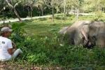 Слоновый заповедник на Пхукете