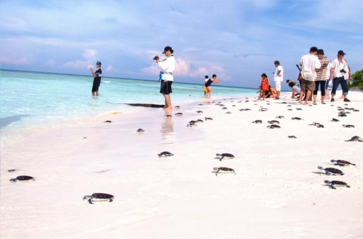 beach mai kao1