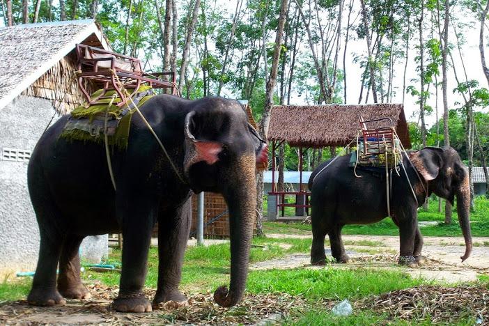 park elefants