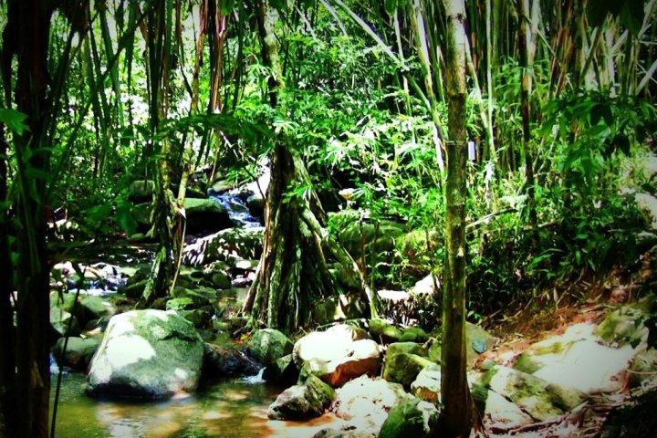 park jungles