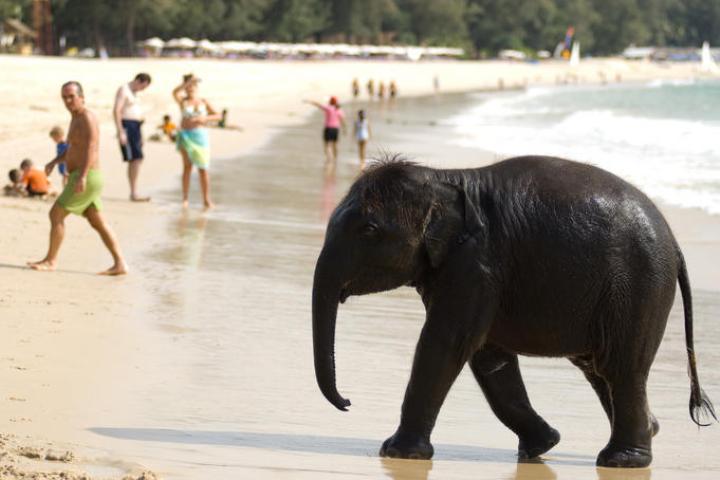 elephants phuket