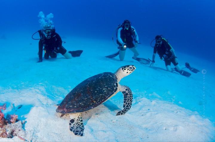 similan diving
